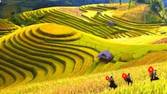 Drupal Vietnam
